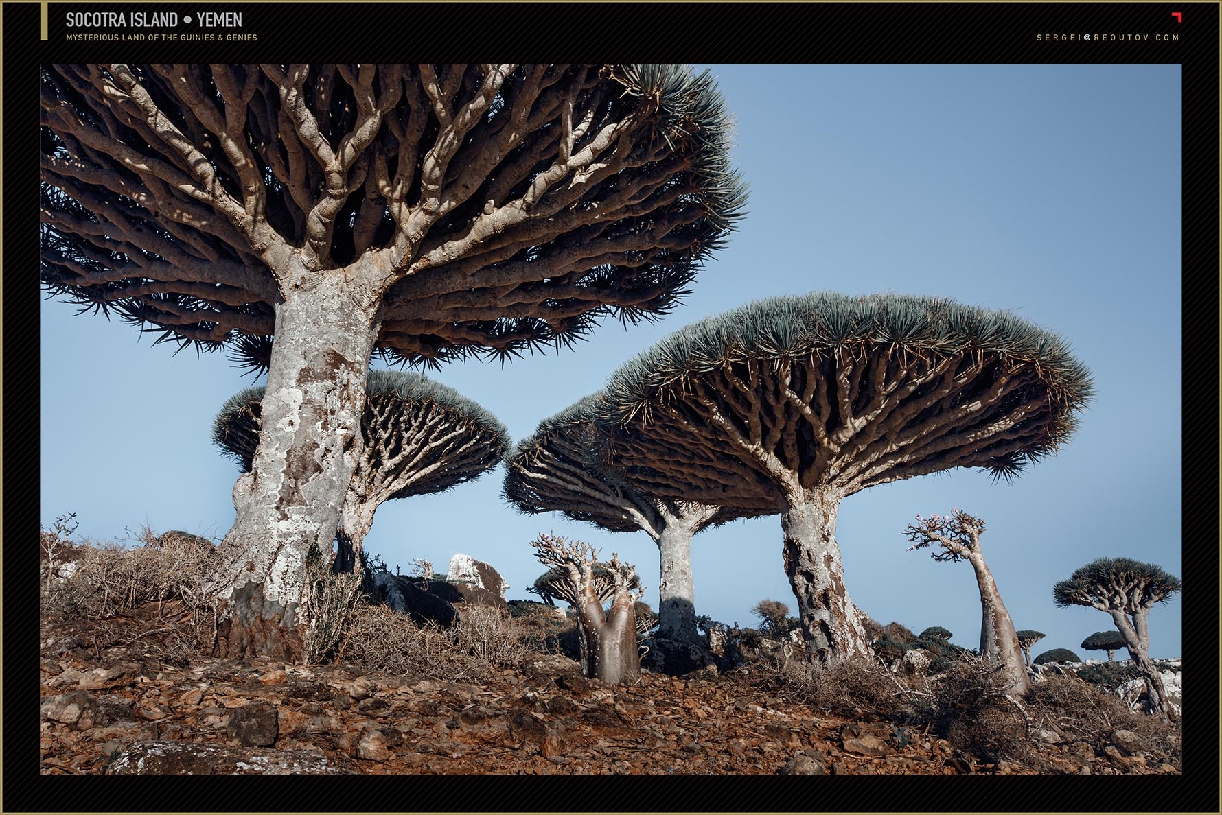 Camel Thorn Tree, Deadvlei, Namib Desert