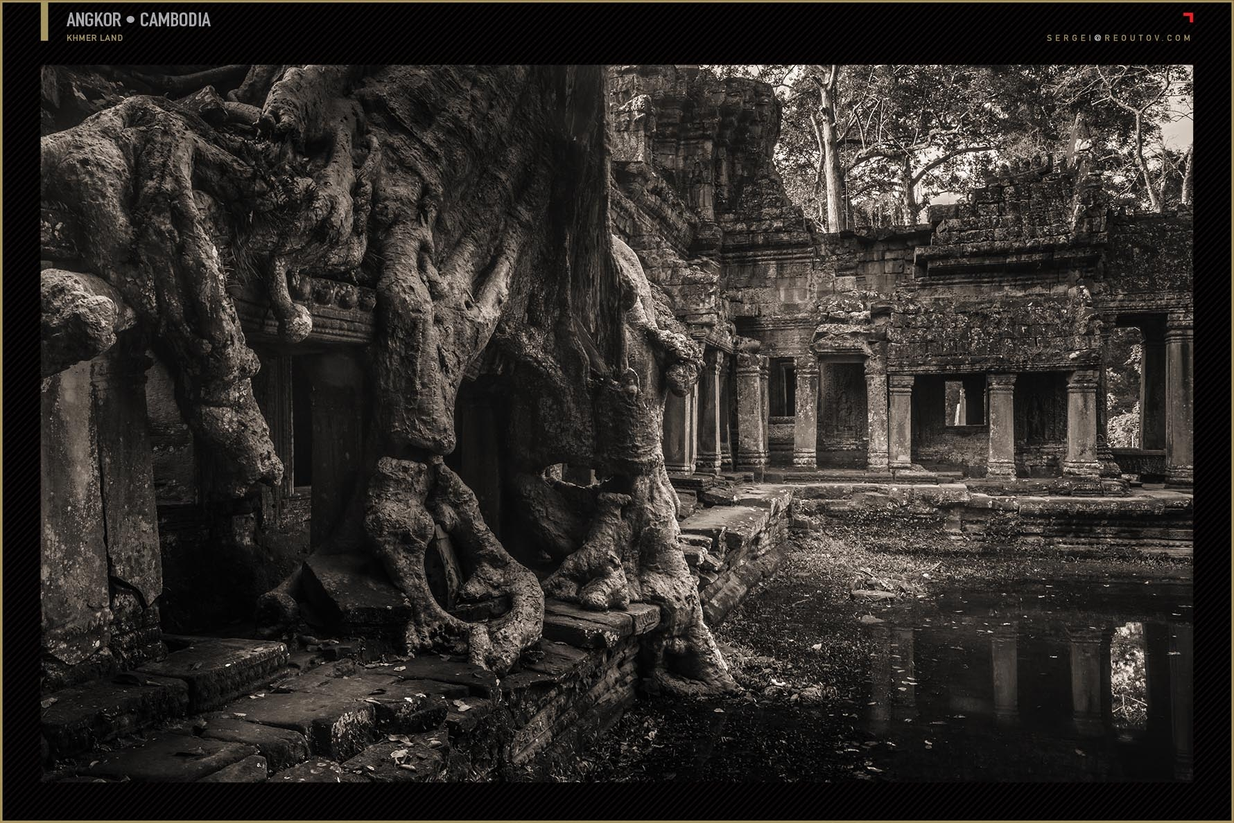 Tree roots with ruins in Cambodia