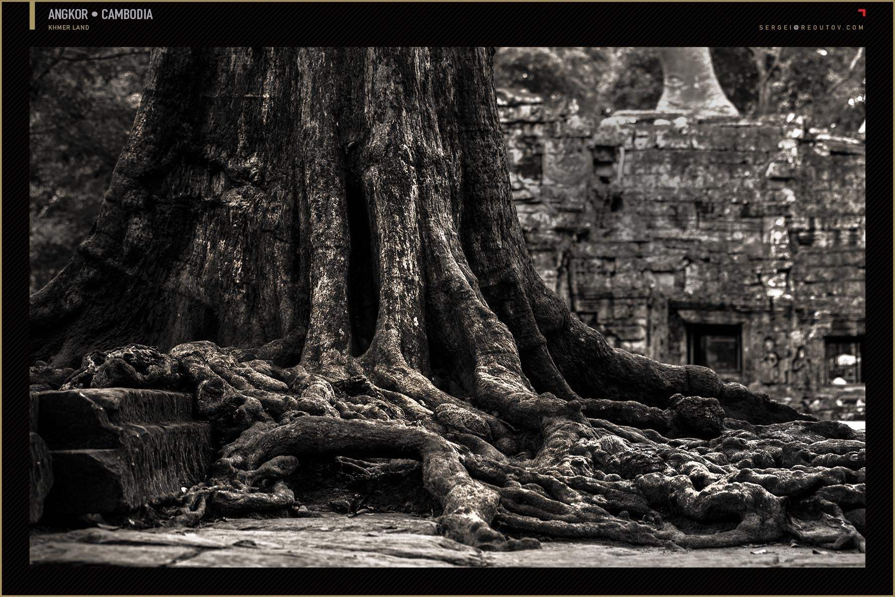 Tree with ruins in Cambodia