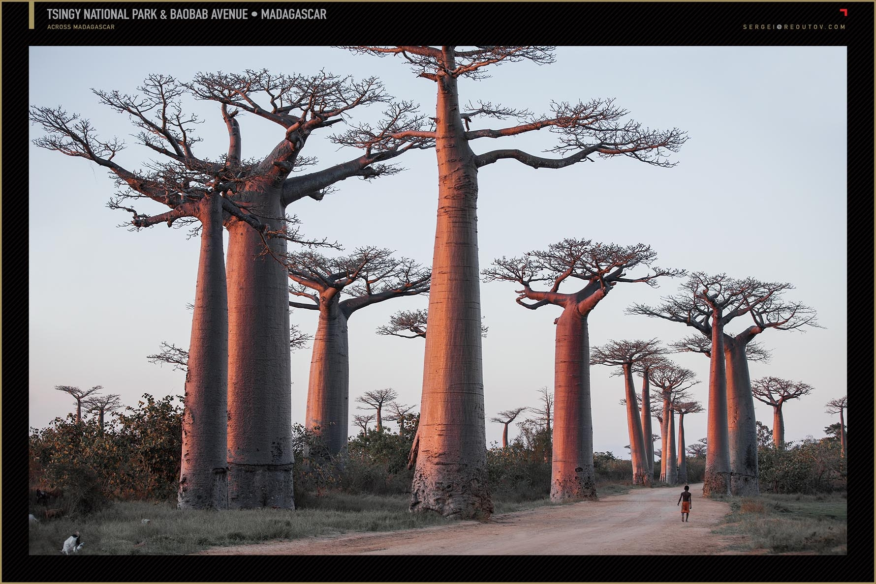Alley of the Baobabs, Menabe region,Madagascar